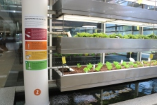 Loyola University (Chicago, IL); Aquaponics System Vinyl Decal + #2